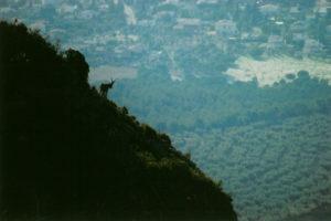 Cabreta a Montserrat